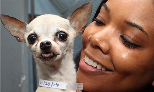 Gabrielle Union Lends Celebrity To Four Legged Friends, Encourages People To Adopt Dogs