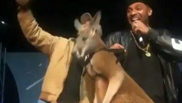 Mike Epps Apologizes, Donating Money To Save Kangaroos [VIDEO]
