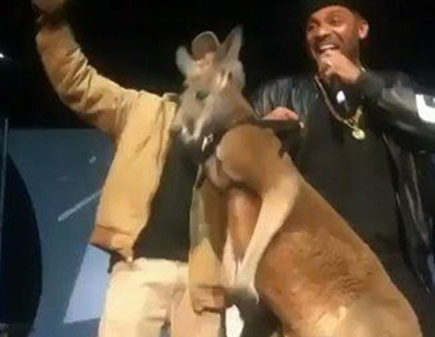 Mike Epps Apologizes, Donating Money To Save Kangaroos [VIDEO]